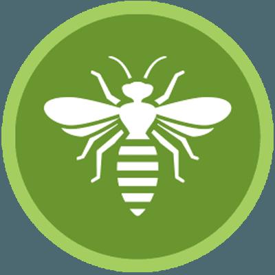 Disinfestazioni di api e vespe di Disinfestazioni Ambientali Carta Bachisio a Olbia Tempio