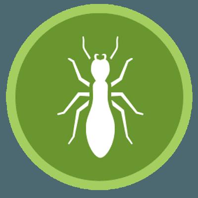 Disinfestazioni termiti di Disinfestazioni Ambientali Carta Bachisio a Olbia Tempio