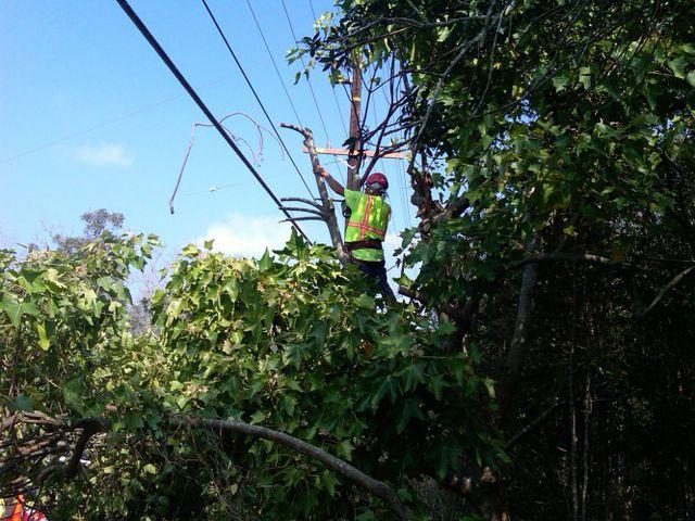 Emergency tree service underway in Kona, HI