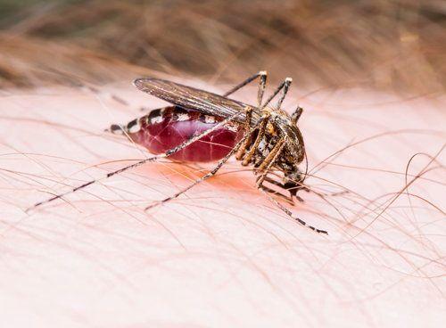 Mosquito Spray Abilene, TX