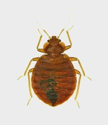 Bed Bug Treatment For Ontario Highland Riverside Ca