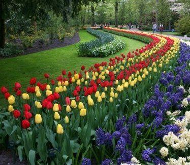 progettazione giardini, potatura alberi, manutenzione parchi