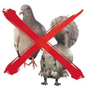 Pest control cross - Sutton, London - M.R Pest Control Surrey - Pest