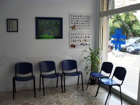 centro veterinario
