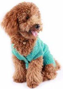 Tan Poodle with green shirt for blog