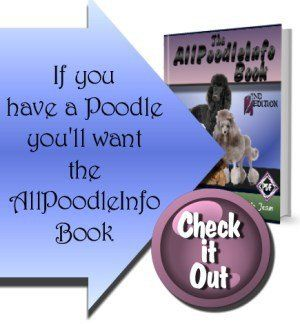 Poodle Life Expectancy Leading Causes Of Death