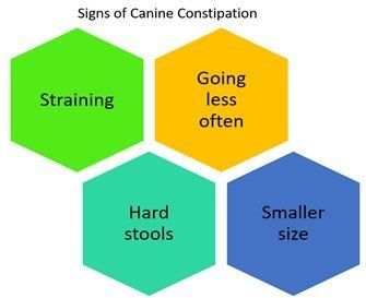signs-of-canine-constipation-chart