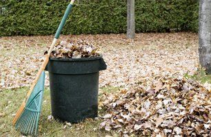 dry leaves removal