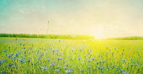 sunrise and flowers