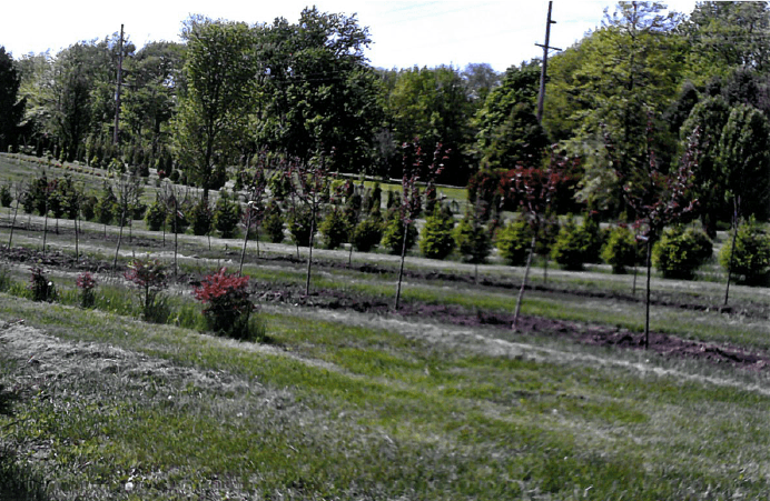 Tree planting among our landscape services in Alpha, IL