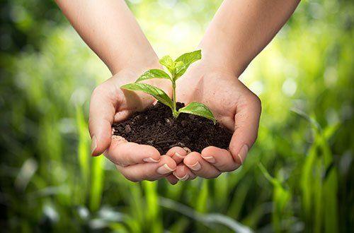 Mani giunti piene di terra da cui sgorga una piccola pianta
