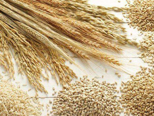 spighe di grano e chicchi di grano