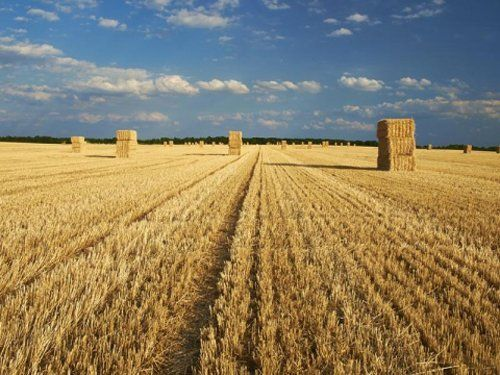 campi di grano con cielo blu