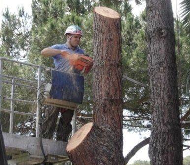 Zanetta Mario e Pietro - abbattimento alberi - novara