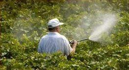 bonifica aree verdi, disinfestazione aree verdi, trattamenti antiparassitari