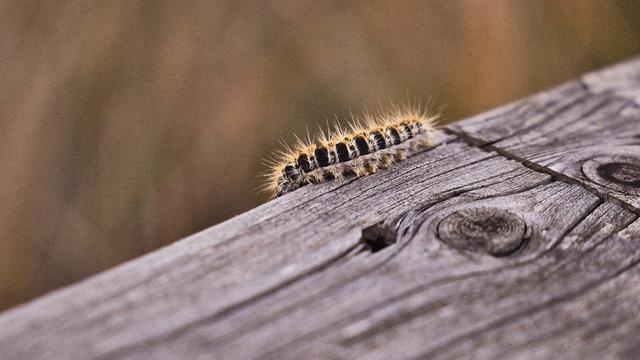 un insetto su un tronco di legno