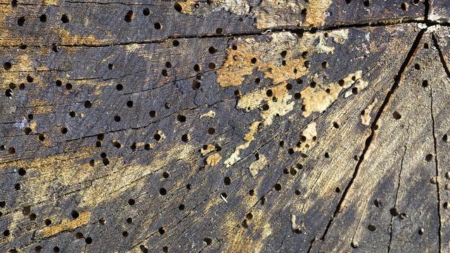 dei buchi nel legno
