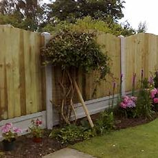 mature garden fencing