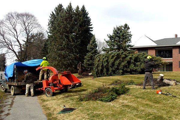 view all - Tree Service & Landscaping PropertyCare Inc - Rochester NY