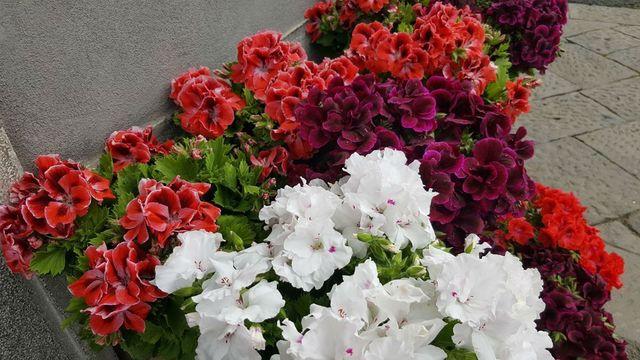 Fiori Bagnoli Irpino : Al bouquet piante e fiori di chieffo olga