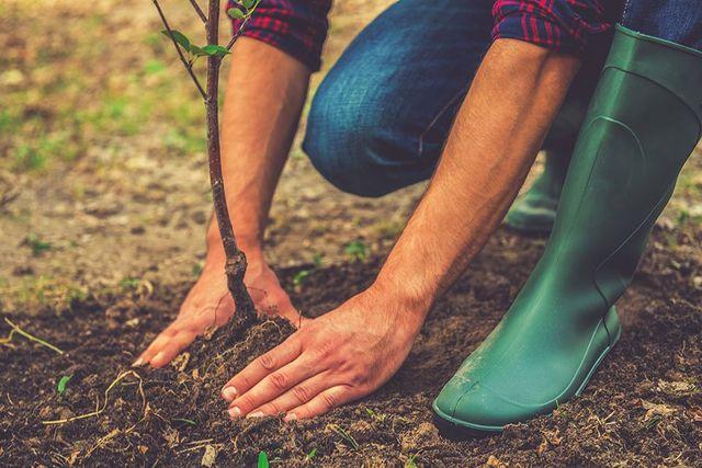 due mani  di un uomo che piantano un alberello nella terra