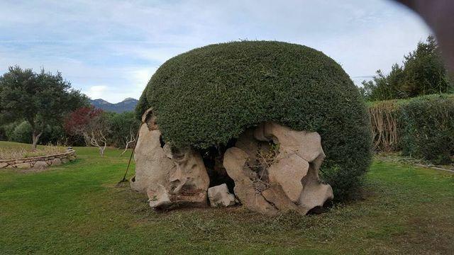 delle rocce e sopra un grande cespuglio