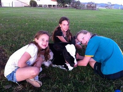 3 young girls playing with baby cow