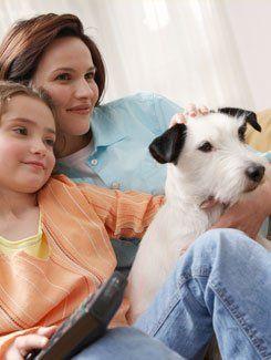 Classy cuts pet salon home pet grooming services pet grooming service pet groomer solutioingenieria Choice Image