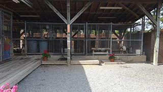 Vet Hospital Pet Boarding Outdoor Area in Pembroke, NC