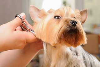 Pet Grooming Pembroke, NC