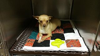 Small Dog Resting in a Boarding Cage at Pembroke Vetrerinary Hospital