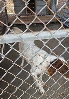 Dog in an Outdoor Pet Boarding Area in Pembroke, NC