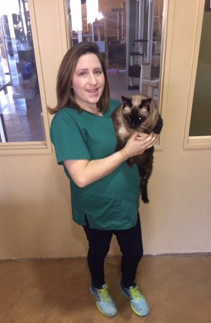 Cat Boarding Staff Marin County