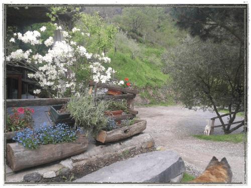 dei gradini in pietra e dei tronchi con dei fiori azzurri e delle piante