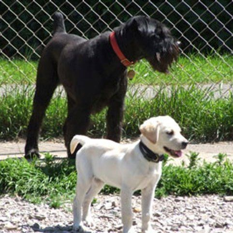 A black dog and a white dog