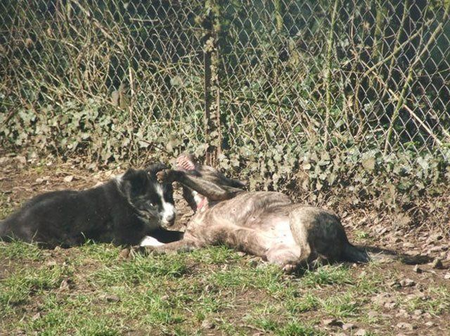 Puppy kennels