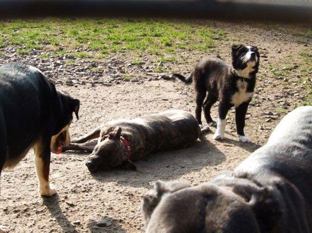 Dogs lazing around