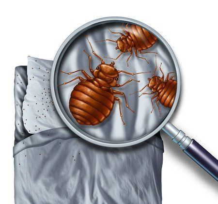 Avenge Pest Control performs a complete bed bug inspection