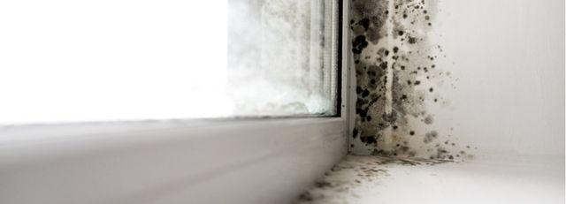 Come prevenire la formazione di muffe in casa