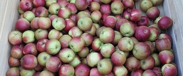 home-grown apples
