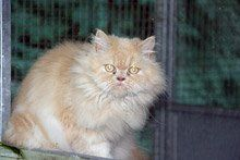 Cat Catteries - Gillingham, Dorset - Orchard Kennels and Cattery - Cat