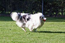 Dog running - Gillingham, Dorset - Orchard Kennels and Cattery