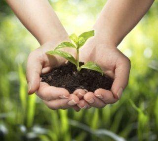 piante, alberelli da piantare, vegetazione da casa