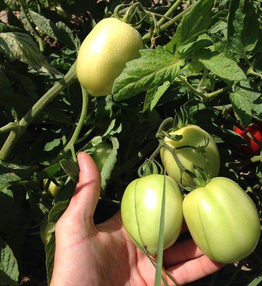 Verdura fresca proveniente dalle zone limitrofe e da altre parti d'Italia