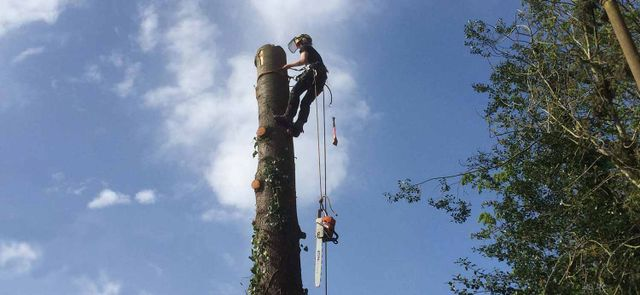 Ltd Tree Surgeons Alming Farnham Esher Surrey Sus
