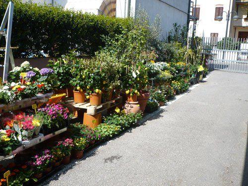 allestimento di piante da giardino