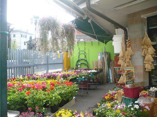 piante fiorite in un negozio esterno
