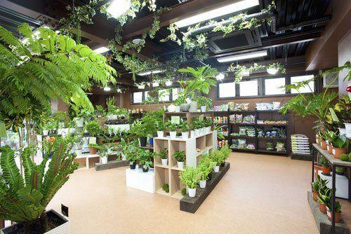 piante e fiori in un negozio espositivo interno