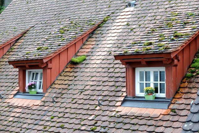 Moss on an Auckland house in need of re-roofing