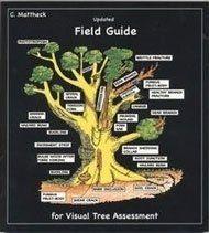 VTA sugli alberi
